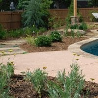 Close up Pool Landscaping