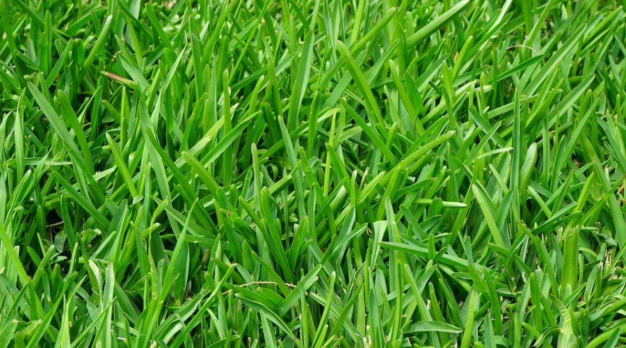 Important Reasons to Aerate and Fertilize Your Yard