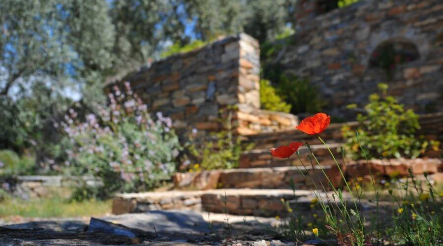 Close up photo of red flower with out of focus walkway, landscaping, and stone wall in background