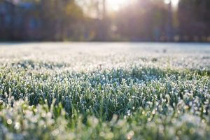 Early morning photo of frost on grass