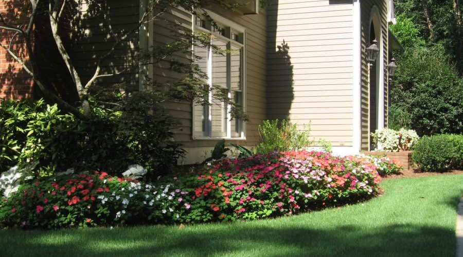 Flower bed with colorful pink flowers