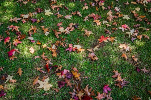 Colorful autumn leaves on green lawn
